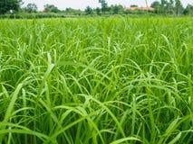 Color verde del prado Foto de archivo libre de regalías