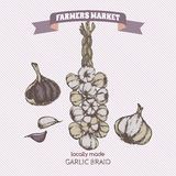 Color vintage garlic braid template. Royalty Free Stock Photo