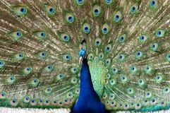 Color vivo Imagen de archivo