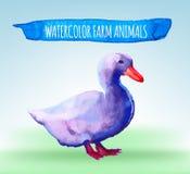 Color watercolor duck Stock Photo
