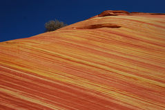 Color at the Wave. The Wave is part of the sandstone formation in the Coyote Buttes North area of Arizona. The color of the sandstones comes from various iron Royalty Free Stock Photo