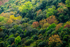 Color of wild. Multi color of forest at 'Doi INTHANON, THAILAND Stock Images