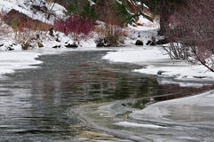 The Color of Winter. A Colorado mountain stream begins the freeze of winter Royalty Free Stock Image