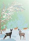 Color winter landscape with deers Royalty Free Stock Image