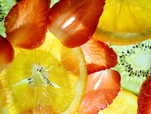 Color the world. Slices of fresh fruits lit from below Royalty Free Stock Image