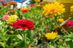 Color y fondo de la flor fotografía de archivo