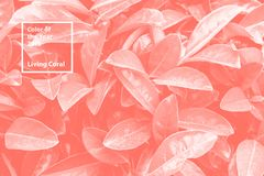 Color of the year 2019 Living Coral. Floral natural pattern of foliage. Popular trend palette for design illustrations. Fabrics, fashion, images. Tinted royalty free stock photography