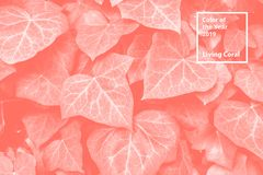 Color of the year 2019 Living Coral. Floral natural pattern of foliage. Popular trend palette for design illustrations. Fabrics, fashion, images. Tinted stock images