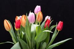 color yellow för tulpan för den röda fjädern för blommafuschiaen stor Royaltyfria Foton