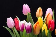 color yellow för tulpan för den röda fjädern för blommafuschiaen stor Fotografering för Bildbyråer