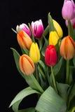 color yellow för tulpan för den röda fjädern för blommafuschiaen stor Royaltyfri Bild