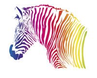 Color zebra Stock Photo