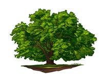 Colora a ilustração realística da foto do vetor da árvore verde grande isolada no branco Foto de Stock Royalty Free
