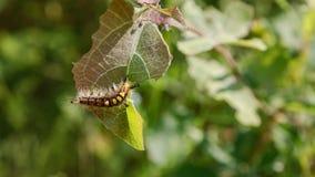 Colora a lagarta Fotografia de Stock Royalty Free