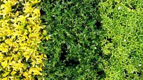 3 colora le foglie Immagini Stock