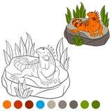 Colora-me: iguana A iguana alaranjada bonito senta-se na rocha Imagem de Stock Royalty Free