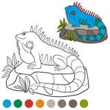 Colora-me: iguana A iguana azul bonito senta-se na rocha Fotografia de Stock Royalty Free