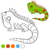 Colora-me: iguana Sorrisos verdes bonitos da iguana Imagem de Stock Royalty Free