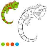 Colora-me: iguana Sorrisos verdes bonitos da iguana Fotografia de Stock