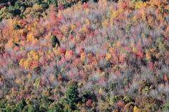 Colora no outono passado a árvore aérea Imagens de Stock