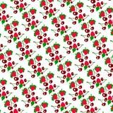 Colora o teste padrão das morangos e das cerejas em um fundo branco Fotografia de Stock