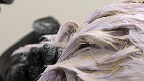 Coloración del cabello, cámara lenta, cierre para arriba, rubia almacen de metraje de vídeo