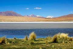 Colorada de Laguna, Bolivia Foto de archivo libre de regalías