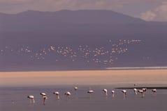 colorada laguna Боливии Стоковое фото RF