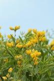 Colorade Wildflowers Stock Photos