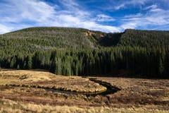 Colorado äng Arkivbild