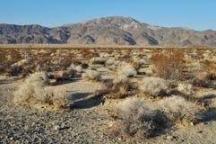 Colorado öken, Joshua Tree National Park Arkivfoton