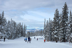 Colorado. Skiers on a slope in Steamboat Springs, Colorado, Usa Royalty Free Stock Photography