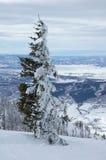 Colorado Imagenes de archivo