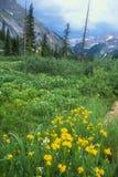 Colorado alpin äng i guling & blått Fotografering för Bildbyråer