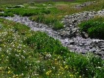 Colorado alpina vildblommor Arkivfoto