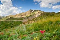 Colorado Alpine Meadow stock photo