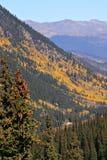 Colorado Aspen Fotografie Stock Libere da Diritti