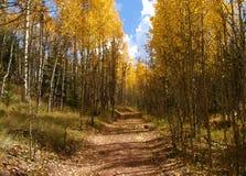 Colorado Aspen. A landscape of the golden aspen and a mountain road through the colors of another Colorado fall stock photos