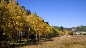 Colorado Aspen Stand och fält Arkivfoton