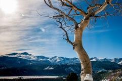 Colorado Aspen stock photography