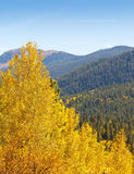 Colorado Aspen Tree and Mountain View Stock Photos