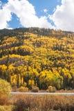 Colorado Aspen Vista Royalty Free Stock Photos