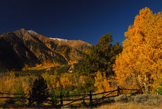 Colorado Aspens. Golden Aspens along fenceline and mountains in Colorado Stock Photo