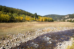 Colorado Aspens and Stream Royalty Free Stock Images