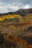 Colorado Autumn Color Royaltyfria Bilder