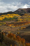 Colorado Autumn Color royalty free stock images