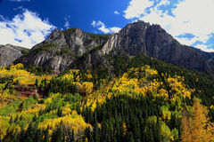 Colorado Autumn Colors Rocky Mountains. Rocky Mountains with autumn aspen leaf changing colors to yellow and orange royalty free stock photography