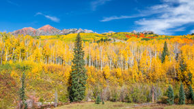 Colorado Autumn Royalty Free Stock Image