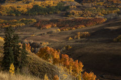Colorado Autumn. Autumn foilage near Crested Butte Colorado in the Gunnison National Forest Stock Image