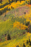 Colorado Autumn landscape Stock Image